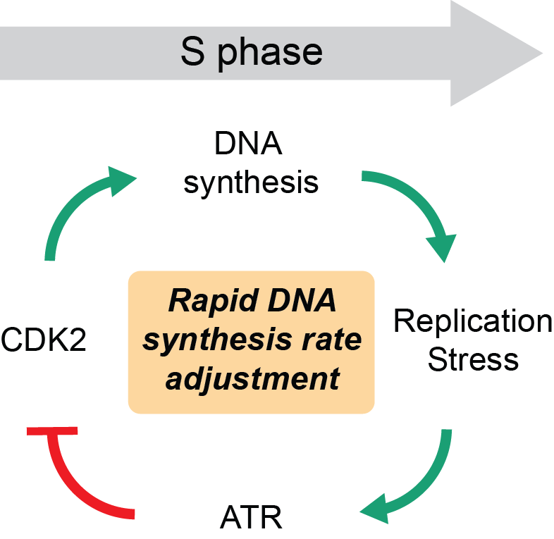 Leighton and Chad's paper is out in Cell Systems
