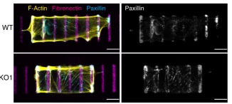 Damien's paper is out in Nature Communications!